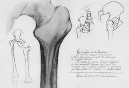 anatomique